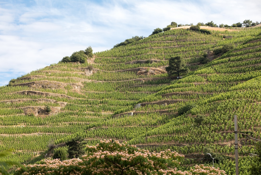 Rhone vineyard France