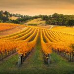 Wine Australia Suspends Wine Export License for Copycat Wine